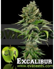 Excalibur (Eva Seeds) Semilla Feminizada de Cannabis
