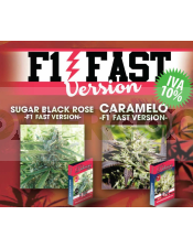 Caramelo F1 Fast Version- NOVEDAD Delicious seeds
