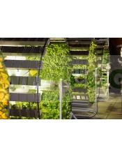 Gi Grow Noria Sistema de Cultivo 336 Plantas