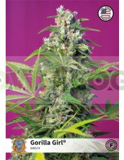 Gorilla Girl (Sweet Seeds)-5 (Semillas