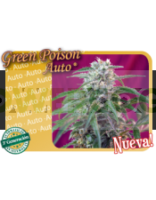 Green Poison Auto (Sweet Seeds)