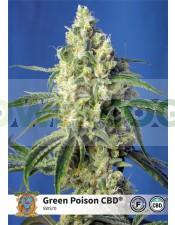 Green Poison CBD (Sweet Seeds)-5 (Semillas