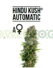 Hindu Kush Automatic (Sensi Seeds)-10