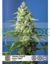 Honey Peach Auto CBD (Sweet Seeds)