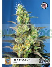 Ice Cool CBD (Sweet Seeds)-5 (Semillas