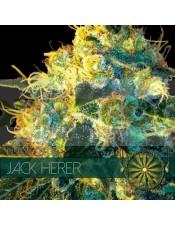 Jack Herer (Vision Seeds) Semilla Feminizada Marihuana Barata
