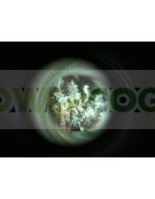 Microscopio para ver los tricomas y resina de la marihuana