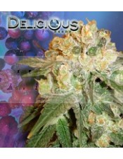 Marmalate (Delicious Seeds) Semilla de Cannabis Feminizada