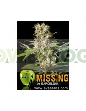Missing in Barcelona (EVA SEEDS)