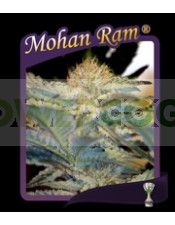 Mohan Ram (Sweet Seeds) Feminizada