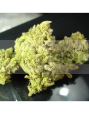 No Name (Medical Seeds) Feminizada marihuana