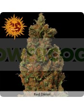 Red Diesel (Barney´s Farm Seeds)