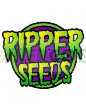 Sideral (Ripper Seeds) Semilla Feminizada de Cannabis Fotodependiente  Las mejores Semillas Feminizadas de Ripper Seeds en nuestras tiendas Dr.Cogollo - PowerCogollo tu GrowShop más barato online  Sideral (Ripper Seeds) Nueva variedad de Ripper Seeds..
