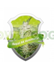 Royal AK Automatic (Royal Queen Seeds) Semilla