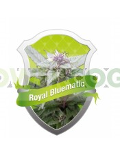 Royal Bluematic (Royal Queen Seeds) Semilla