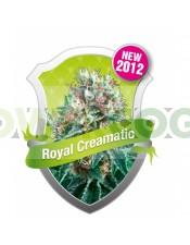 Royal Creamatic (Royal Queen Seeds) Semilla Autofloreciente cannabis-marihuana Feminizada