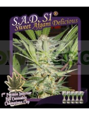 S.A.D. S1 (Sweet Afgani Delicious)