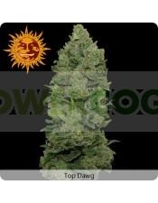 semilla Feminizada Top Dawg de Barney´s Farm Seeds