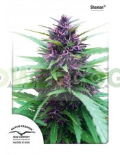 Shaman Feminizada (Dutch Passion Seeds)