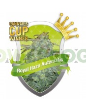 Semillas Royal Haze Automatic Feminizadas de Royal Queen Seeds