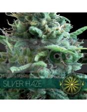Silver Haze Vision Seeds
