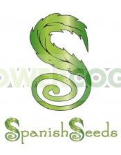 Auto Blueberry X Auto Sweet (Spanish Seeds) Semilla Feminizada Autofloreciente Cannabis