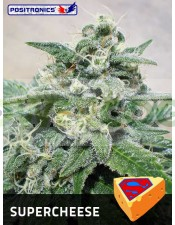 SuperCheese (Positronics Seeds) Semillas