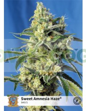 Sweet Amnesia Haze (Sweet Seeds)-100 Semillas Feminizadas