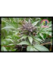 Sweet Purple Feminizada (Semillas)