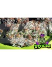 Toxic (Ripper Seeds) Semilla