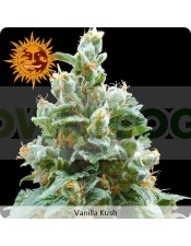 Vanilla Kush (Barney´s Farm) Semilla Feminizada 100%