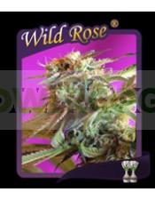 Wild Rose (Semillas)