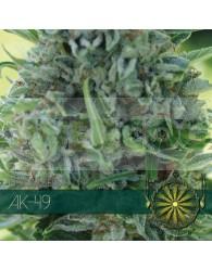 AK-49 Feminizada (Vision Seeds)