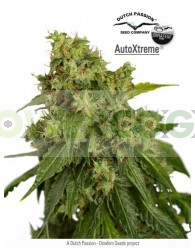 Auto Xtreme Feminizada (Dutch Passion)