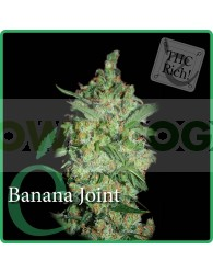 Banana Joint Feminizada (Elite Seeds)