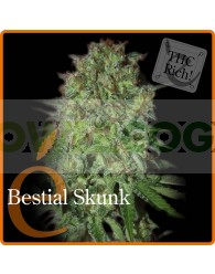 Bestial Skunk (Elite Seeds)