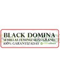 Black Domina Feminizada 100% Granel