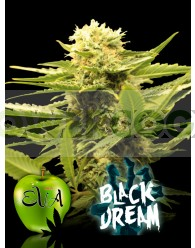 BLACK DREAM (EVA SEEDS) FEMINIZADA