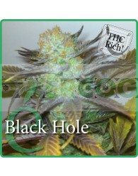 Black Hole (Elite Seeds) Semilla Feminizada