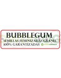 BubbleGum Feminizada 100% Granel