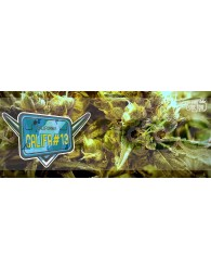 Califa #13 (The Doctor Seeds)