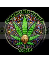 Auto Critical Ak47 (Cannabis Seeds) Feminizada