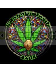 Psico White Berry (Cannabis Seeds) Feminizada