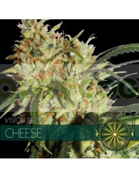 Cheese Feminizada (Vision Seeds)