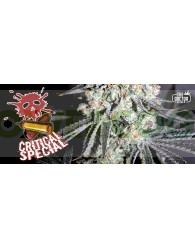 Critical Special Feminizada(The Doctor Seeds)