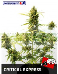 Critical Express (Positronics Seeds)