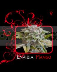 Envidia Mango (7 Pekados Seeds)