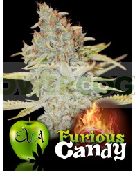 FURIOUS CANDY (EVA SEEDS) FEMINIZADA
