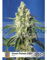 Green Poison CBD (Sweet Seeds)
