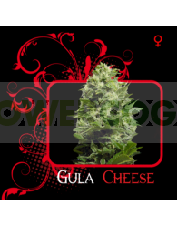 Gula Cheese (7 Pekados)